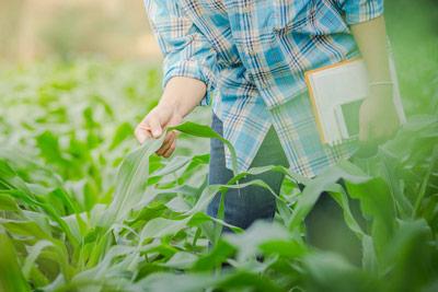 programa-doctorado-agroindustria
